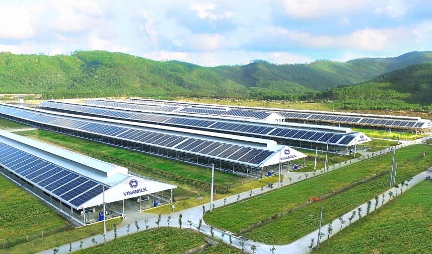 Trang trại bò sữa Vinamilk Quảng Ngãi có quy mô lớn với công nghệ hiện đại và đã được đầu tư hệ thống điện mặt trời từ đầu năm 2021