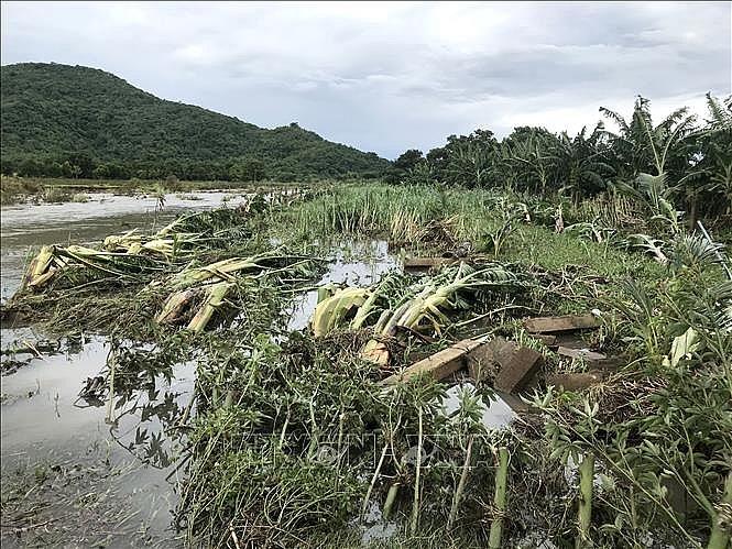 Nhiều diện tích cây ăn trái, hoa màu ở Bình Thuận bị ngã đỗ do lũ quét, năm 2019.