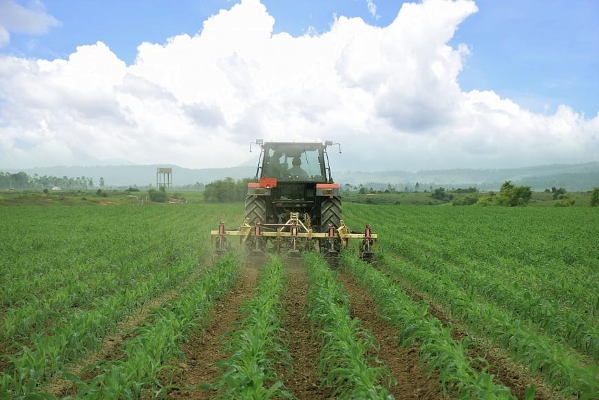 Cánh đồng yến mạch, bắp hữu cơ tại Trang trại bò sữa Lao-Jagro ở Xiêng Khoảng (Lào), ảnh chụp tháng 5/2021